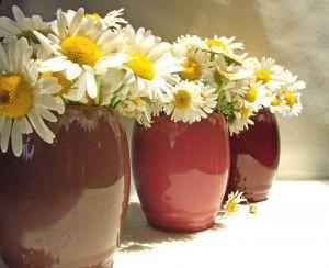 1068808_daisies