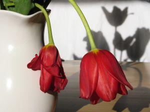 288061_flower_shadows