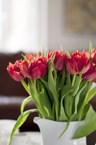 1388853_red_tulips
