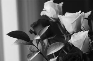 lone roses