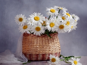 daisies in a wickerbag