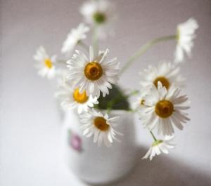 daisy stems