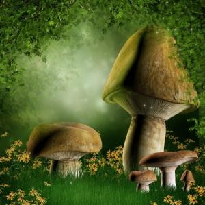 mushroom sprout