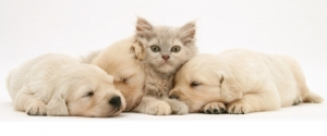 pups and cat