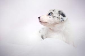 puppy-pup